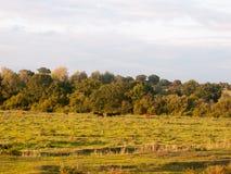 Schöner Sonnenuntergang beleuchtete grüne Landlandszene mit Bäumen und Esprit Lizenzfreie Stockbilder