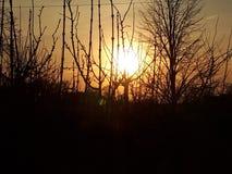 schöner Sonnenuntergang, der in den Niederlassungen von Bäumen ertrinkt Lizenzfreie Stockfotos