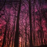 Schöner Sonnenuntergang im Wald Stockfoto