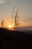 Schöner Sonnenuntergang mit dem langen Gras silhouettiert im Vordergrund Lizenzfreie Stockfotos