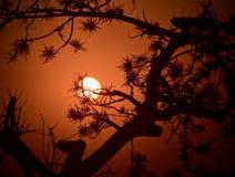 Schöner Sonnenuntergang mit Fotografie der natürlichen Bäume auf Lager stockbild