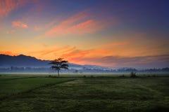 Schöner Sonnenuntergang am Reisfeld mit Gebirgshintergrund lizenzfreie stockbilder