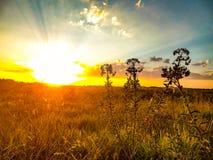 Schöner Sonnenuntergang ungefähr gesehen durch Rosen, um zu blühen lizenzfreie stockfotografie