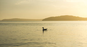 Schöner Sonnenuntergang vom Strand nahe Sydney, Australien Lizenzfreie Stockfotografie