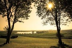 Schöner Sonnenuntergangansichtbaum und Teeplantage mit See Lizenzfreie Stockfotografie