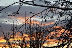 Schöner Sonnenunterganghimmel mit Baumasten Stockbilder