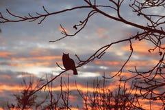 Schöner Sonnenunterganghimmel mit Eule Stockbild