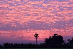 Schöner Sonnenunterganghimmel mit Wolken- und Kokosnussbaum Stockfoto