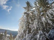 Schöner sonniger Tag auf Steigungen des Schneeschuhberges in den cass West Lizenzfreies Stockfoto
