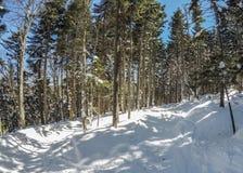 Schöner sonniger Tag auf Steigungen des Schneeschuhberges in den cass West Stockfotografie