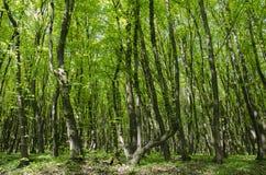 Schöner sonniger Tag in einem grünen Wald stockfotos