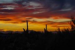 Schöner später Arizona-Wüstensonnenuntergang stockbild