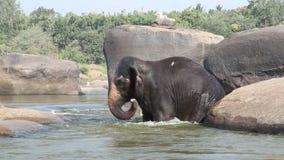 Schöner spielerischer Elefant, der Bad im Fluss hat stock video