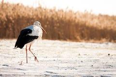 Schöner Storch am Park Lizenzfreie Stockfotos