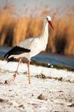 Schöner Storch am Park Stockfotos