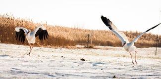 Schöner Storch am Park Stockfoto