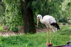 Schöner Storch steht auf einem Zaun stockbilder