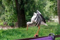 Schöner Storch steht auf einem Zaun lizenzfreies stockfoto