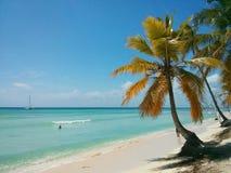 Schöner Strand mit einer Palme Stockfoto