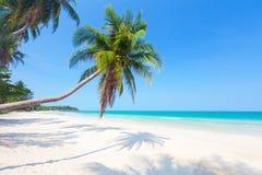 Schöner Strand mit Kokosnusspalme stockfoto