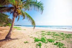 Schöner Strand mit Kokosnusspalme lizenzfreies stockbild