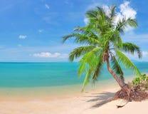 Schöner Strand mit Kokosnusspalme und -meer stockfotografie