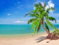 Schöner Strand mit Kokosnusspalme und -meer lizenzfreie stockfotografie