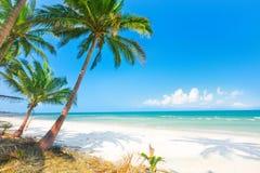 Schöner Strand mit Kokosnusspalme und -meer Lizenzfreies Stockfoto