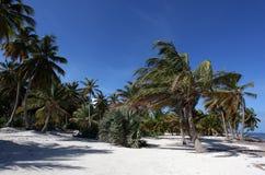 Schöner Strand mit Palmen stockfotos
