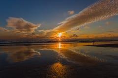 Schöner Strand-Sonnenuntergang mit einer Seemöwe Lizenzfreie Stockfotografie