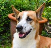 Schöner streunender Hund Lizenzfreie Stockbilder