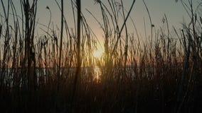 Schöner szenischer Sonnenuntergang auf dem Strand stock footage