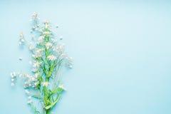 Schöner Türkishintergrund mit Bündel wilden Gänseblümchen blüht, Draufsicht Stockfoto