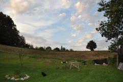 Schöner Tag auf einem Bauernhof Lizenzfreie Stockfotografie