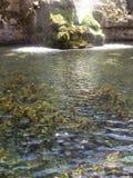 Schöner Teich Lizenzfreies Stockfoto