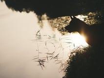 Schöner thailändischer ridgeback Hund im Wald auf dem Fluss Lizenzfreies Stockfoto