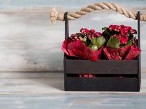Schöner Topf Blumen eingewickelt im roten Papier, Geschenk in einem hölzernen Korb Stockbilder
