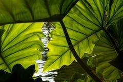 Schöner tropischer Blatthintergrund stockfoto