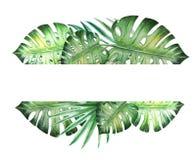 Schöner tropischer Blatttextrahmen Monstera, Palme Adobe Photoshop f?r Korrekturen lizenzfreie abbildung
