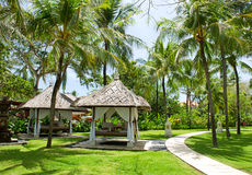 Schöner tropischer Garten Stockfoto