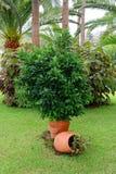 Schöner tropischer Garten mit Palmen Stockfoto