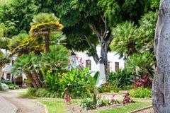 Schöner tropischer Garten mit Palmen und Blumen Lizenzfreie Stockfotos