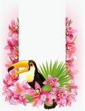Schöner tropischer Hintergrund Stockfotos