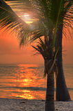 Schöner tropischer Strand bei Sonnenuntergang stockfoto