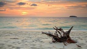 Schöner tropischer Strand mit dem hölzernen Zweig an der Dämmerung morgens Lizenzfreie Stockfotos