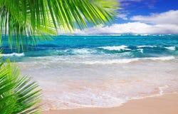 Schöner tropischer Strand mit klarem Ozean. Stockbild
