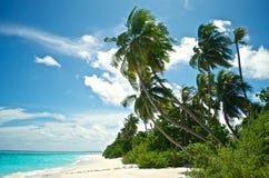 Schöner tropischer Strand mit Palmen stockbilder