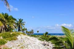 Schöner tropischer Strand mit Palmen und großem blauem Himmel Stockbilder