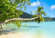 Schöner tropischer Strand in Seychellen Stockfoto