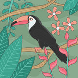 Schöner Tukan-Vogel-Editable Vektor-Illustration Stockbild